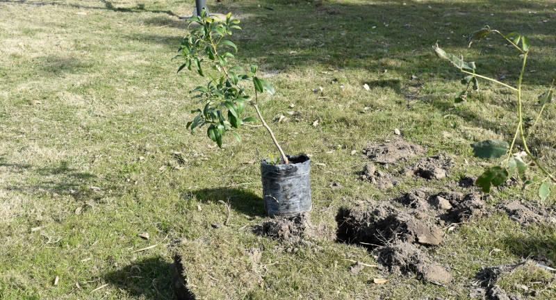 Plantación de árboles.
