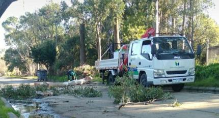Camión de arbolado público con funcionarios realizando la poda de los árboles.